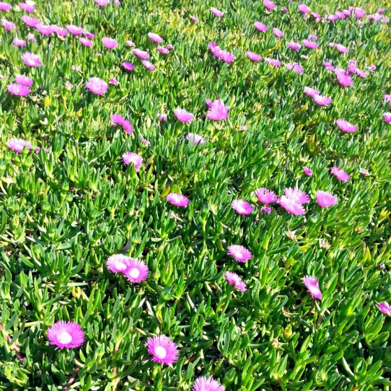 Flowers California