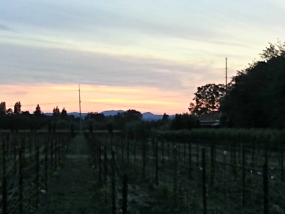 Sunset Wine Country