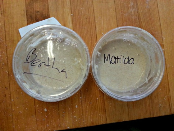 Sourdough Starter Bertha Matilda
